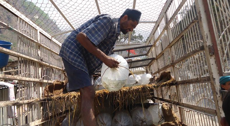 Fish Farming and Hygiene – FS1 | UMN Support Trust